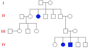 The Open Door Web Site : IB Biology : Genetics : Pedigree Charts