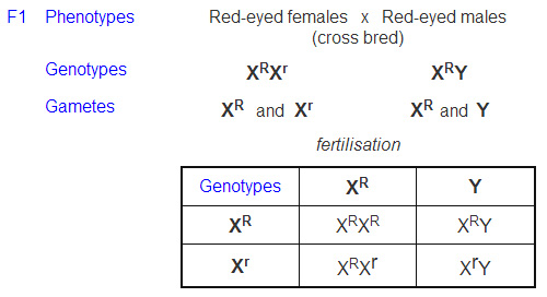 Sex linked traits in history