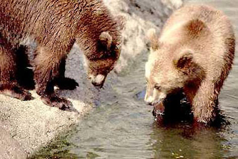 Bears, Vincennes, France � Shirley Burchill