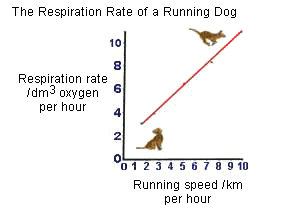 Drawing showing the respiration rate of a running dog � Shirley Burchill